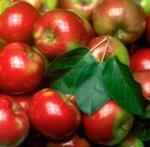 Запеченное яблочное варенье